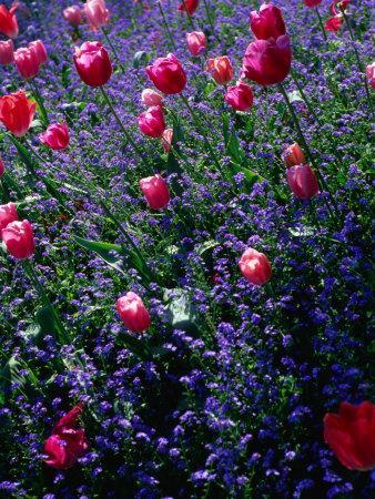 https://imgc.artprintimages.com/img/print/flowers-in-monet-s-garden-giverny-haute-normandy-france_u-l-p10xea0.jpg?p=0