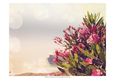 Flowers in Paradise II-Sylvia Coomes-Art Print