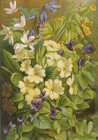 Flowers of March and April: Viola