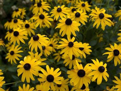 Flowers on the University of Nebraska-Lincoln Campus-Joel Sartore-Photographic Print