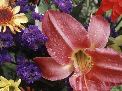 Flowers Sprinkled with Dew-Mitch Diamond-Photographic Print