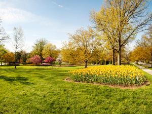 Flowers with Trees at Sherwood Gardens, Baltimore, Maryland, USA