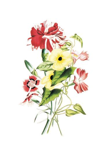 Flowers-Louise Anne Twarmley-Art Print