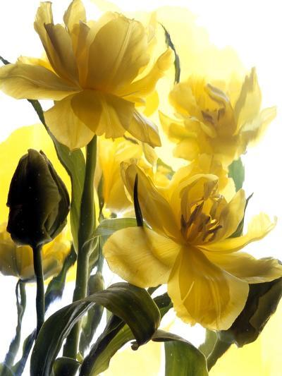 Flowers-Andrzej Pluta-Giclee Print
