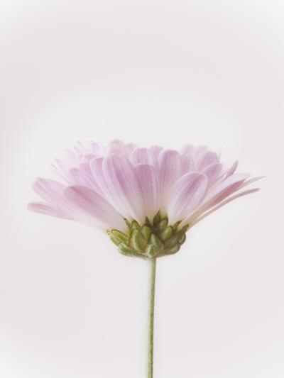 Flowers-Robert Llewellyn-Photographic Print