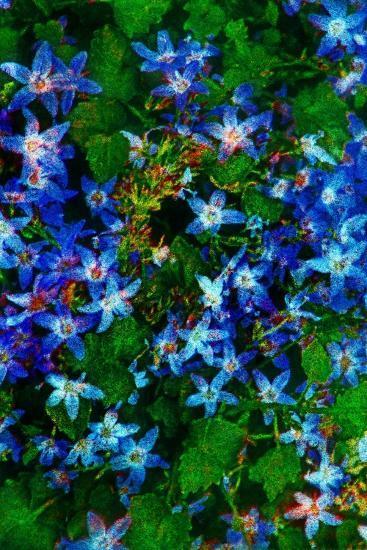 Flowers-Andr? Burian-Photographic Print