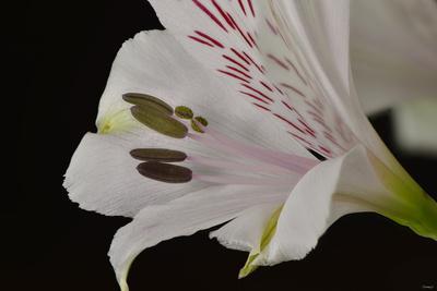https://imgc.artprintimages.com/img/print/flowers_u-l-q10pk2g0.jpg?p=0