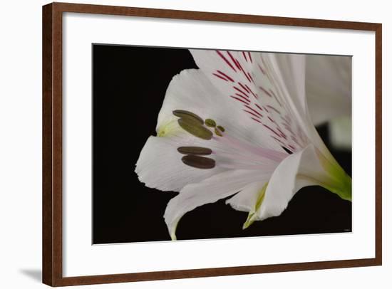 Flowers-Gordon Semmens-Framed Photographic Print