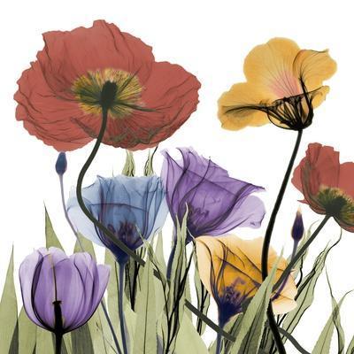 https://imgc.artprintimages.com/img/print/flowerscape_u-l-f8tweh0.jpg?p=0