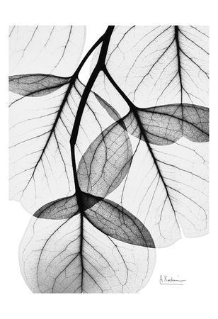 https://imgc.artprintimages.com/img/print/flowing-eucalyptus-in-black-and-white_u-l-f547wf0.jpg?p=0