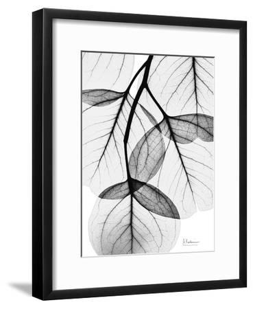 Flowing Eucalyptus in Black and White-Albert Koetsier-Framed Art Print