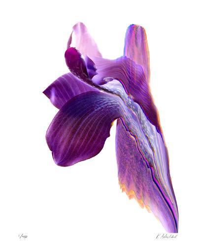 Flowing Orchid-Kate Blacklock-Giclee Print