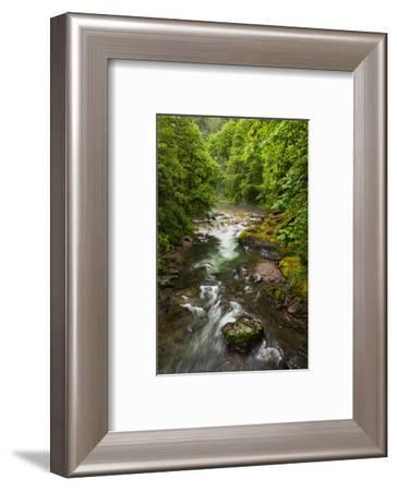 Flowing stream meandering through forest-Sheila Haddad-Framed Photographic Print