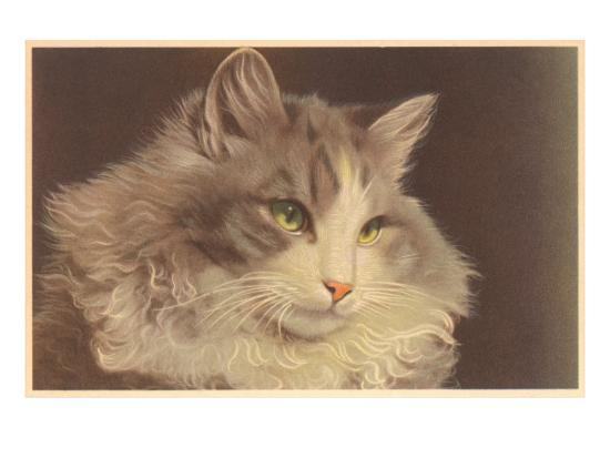 Fluffy Cat--Art Print