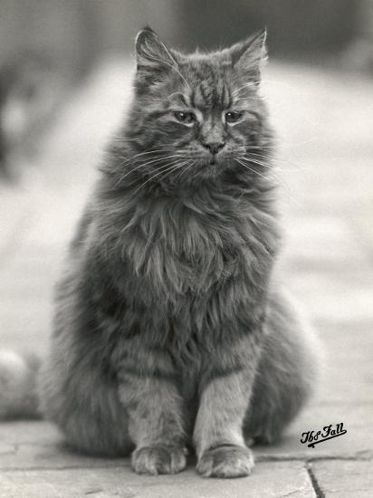 Fluffy Domestic Cat Sitting on the Pavement-Thomas Fall-Photographic Print