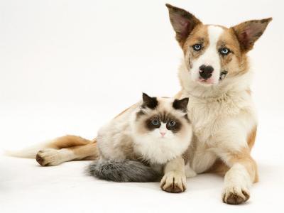 Fluffy Kitten Cuddled up with Dog-Jane Burton-Photographic Print