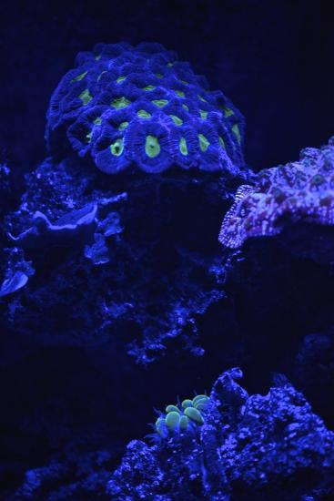 Fluorescent Coral-Kike Calvo-Premium Photographic Print