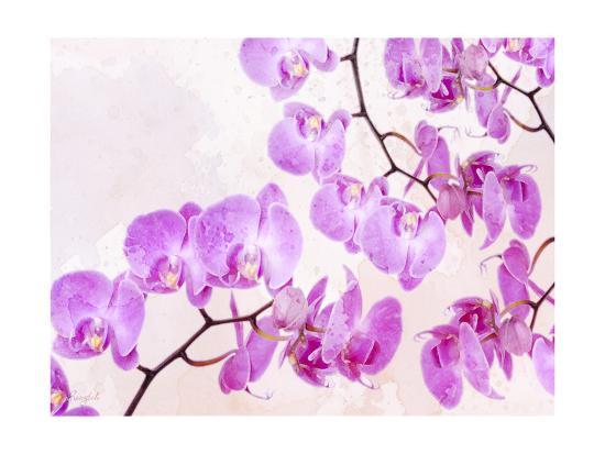 Fluttering Orchid I-Roozbeh-Art Print