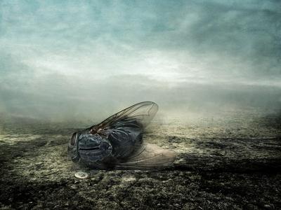 Fly, 2013-Johan Lilja-Giclee Print