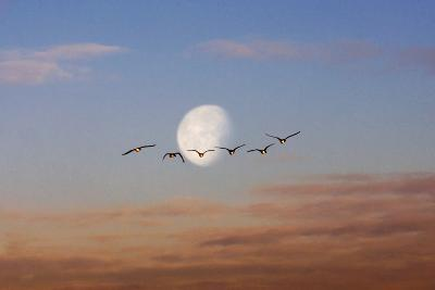 Fly Me to the Moon-Adrian Campfield-Photographic Print