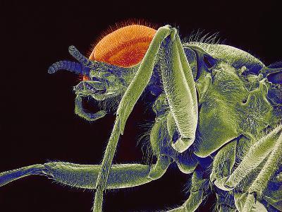 Fly, SEM-Susumu Nishinaga-Photographic Print
