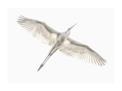 Fly-Keren Or-Giclee Print