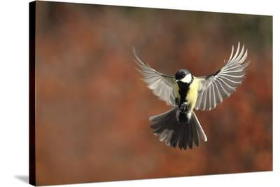 Fly-Barre Thierry-Stretched Canvas Print
