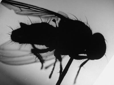 Fly--Photographic Print
