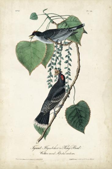 Flycatcher & King Bird-John James Audubon-Art Print