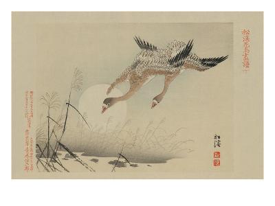 Flying Cranes--Art Print