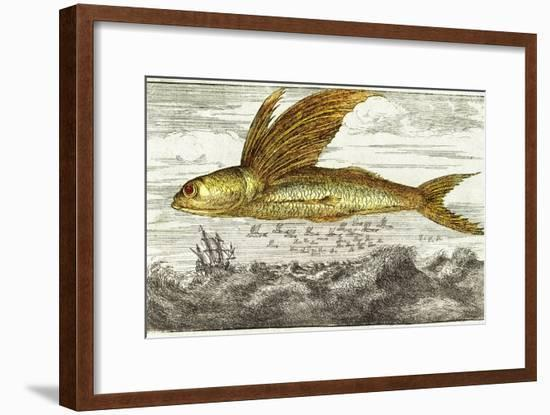 Flying Fish, 17th Century Artwork-Middle Temple Library-Framed Photographic Print