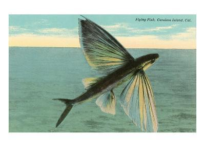 Flying Fish, Catalina, California--Art Print