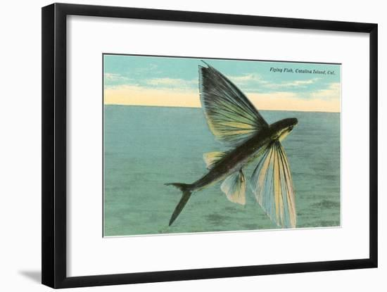 Flying Fish, Catalina, California--Framed Art Print