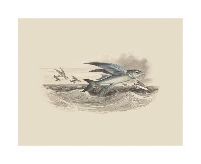 Flying Fish I--Premium Giclee Print