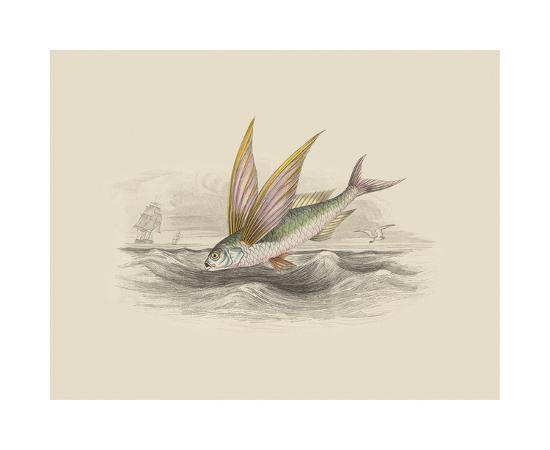 Flying Fish II--Premium Giclee Print