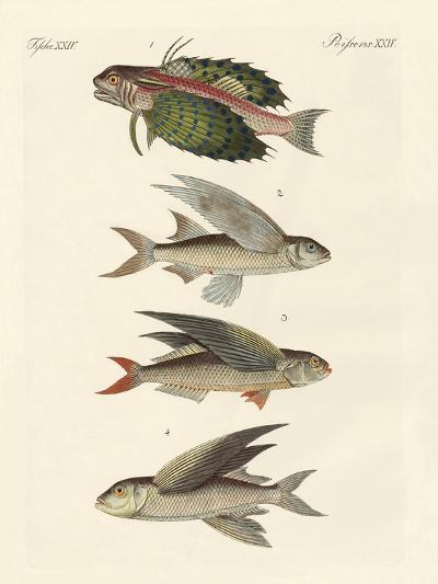 Flying Fish--Giclee Print