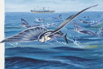 Flying Fishes Flying over a Sea (Cypselurus Heterurus)--Giclee Print