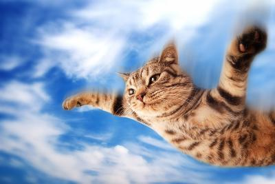 Flying Funny Kitten-NejroN Photo-Photographic Print