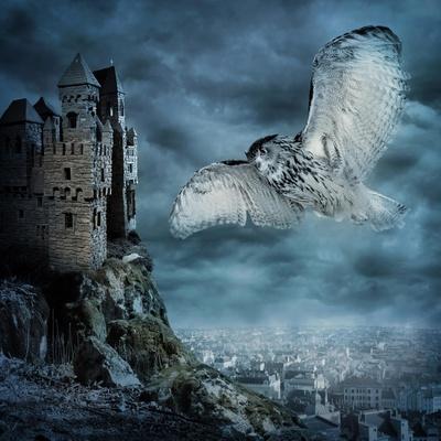 https://imgc.artprintimages.com/img/print/flying-owl-bird_u-l-pn3jhi0.jpg?p=0