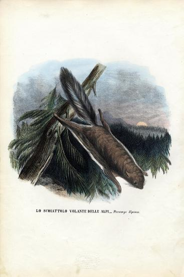Flying Squirrel, 1863-79-Raimundo Petraroja-Giclee Print