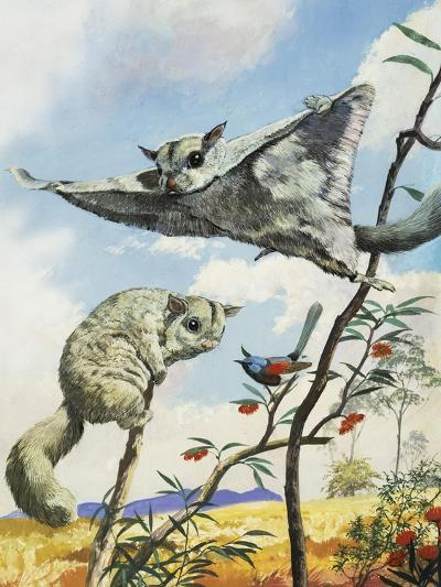 Flying Squirrels--Giclee Print
