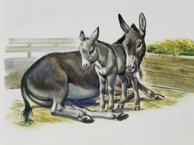 Foal and Jenny of African Wild Ass or African Wild Donkey (Equus Africanus), Equidae--Giclee Print