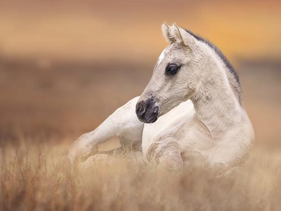 Foal in the Field II-Ozana Sturgeon-Photographic Print