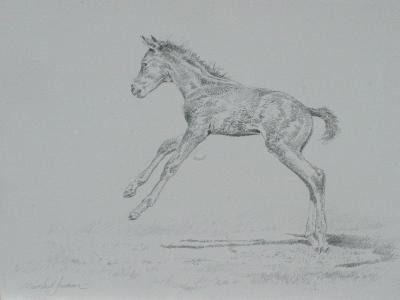 Foal Sketch-Michael Jackson-Giclee Print