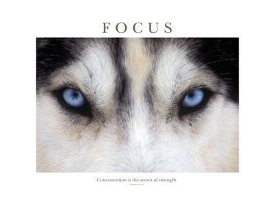 https://imgc.artprintimages.com/img/print/focus-concentration-is-the-secret-of-strength_u-l-q1asuwe0.jpg?p=0