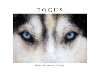 Focus - Concentration Is The Secret Of Strength-Brian Horisk-Photographic Print