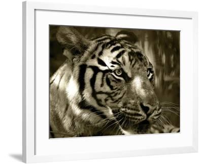 Focus-Dana Brett Munach-Framed Giclee Print