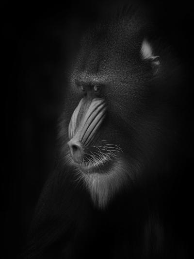 Focussed-Ruud Peters-Photographic Print