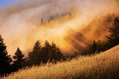 https://imgc.artprintimages.com/img/print/fog-and-light-collision-mount-tamalpais-marin-county-san-francisco_u-l-pwc1cn0.jpg?p=0