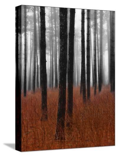 Fog and Pine Trees-John Bartosik-Stretched Canvas Print
